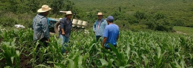 Promueve Sedagro recolección de envases de agroquímicos
