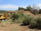 Realizará SDS campaña de acopio de árboles de navidad