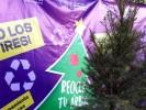 Invitan ciudadanos a participar en donación de árboles navideños